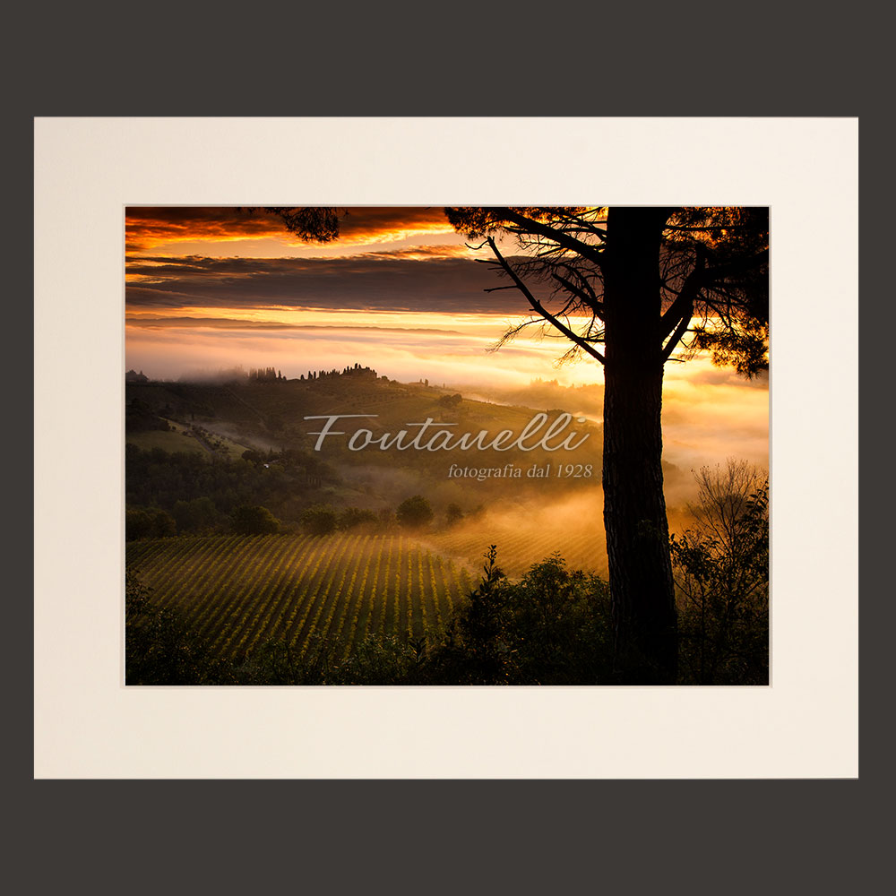photo of vineyards framed by a pine tree and the tuscan