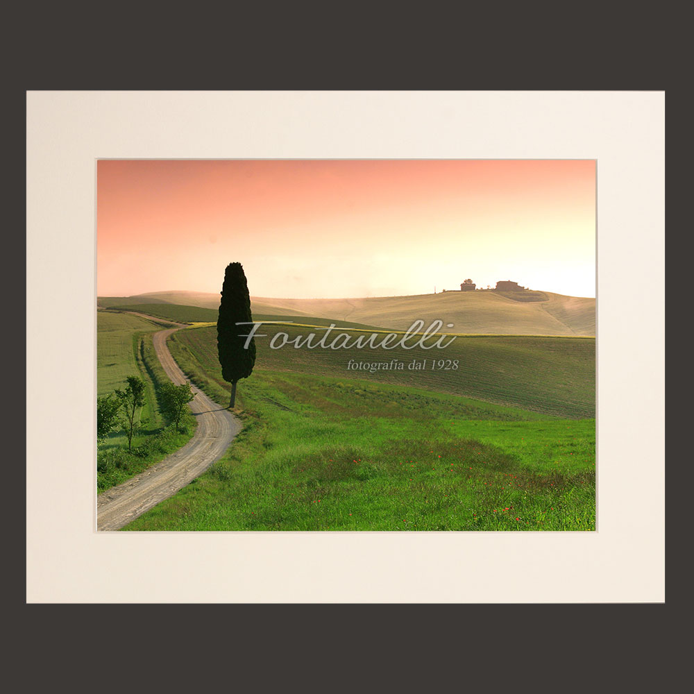 photo of a cypress tree in the val d orcia tuscany   foto