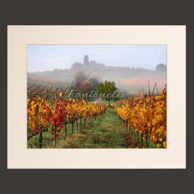 tuscany vineyards picture for sale