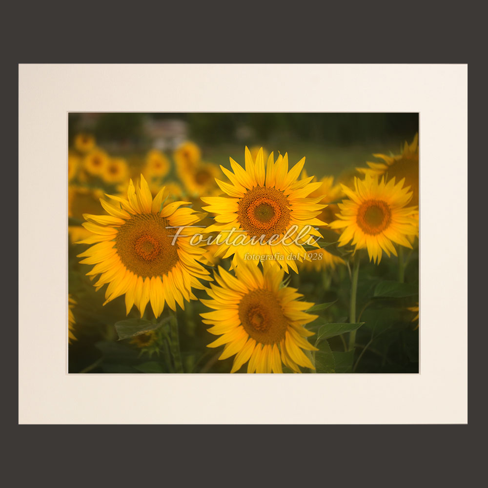 tuscany flowers picture for sale passepartout 31