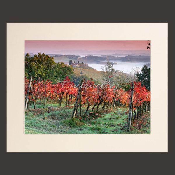 vigneti campagna toscana autunno