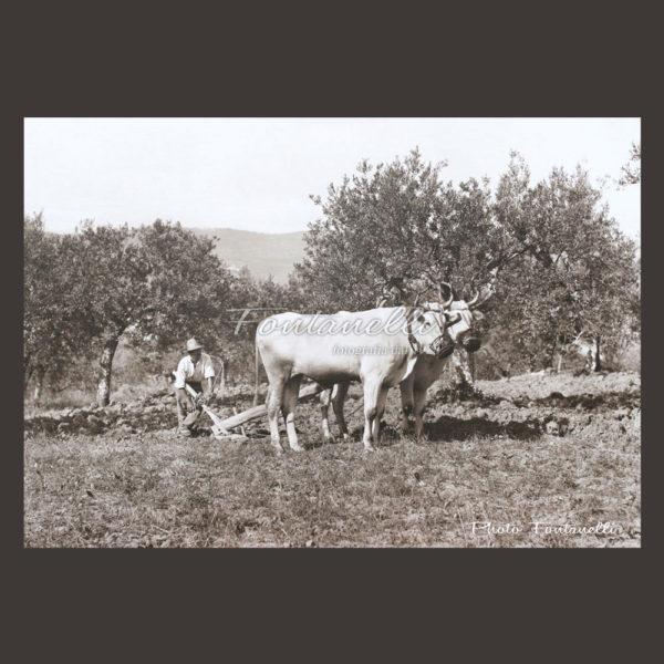 historic picture san gimignano tuscany black and white 65