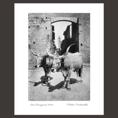 historic picture san gimignano tuscany black and white 39
