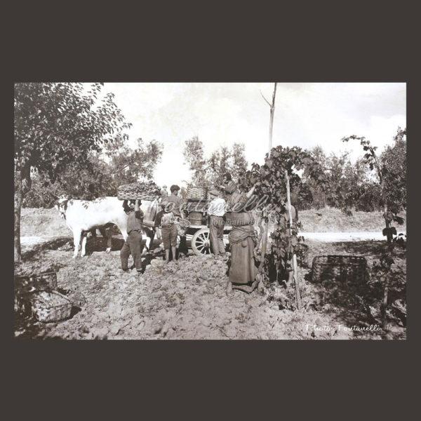 historic picture san gimignano tuscany black and white 64