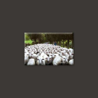 tuscany sheeps magnet