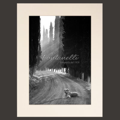 Tuscany black and white picture for sale 8