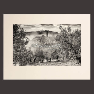 View of San Gimignano from Tuscan uliveta, black and white photo, Tuscany