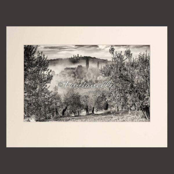 Vista di San Gimignano da uliveta toscana, foto bianco e nero, Toscana