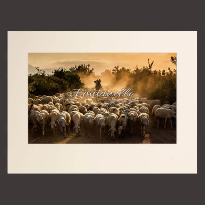 Photo of a shepherd with his sheep in the mist at dawn, Tuscany