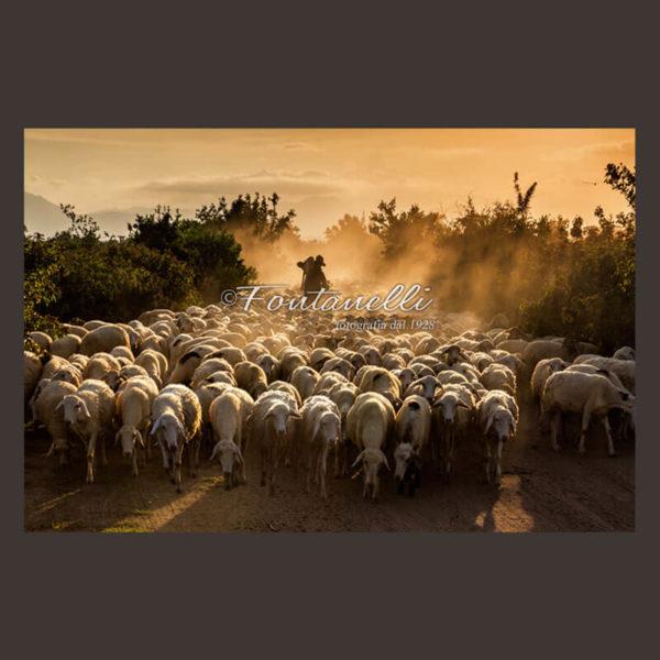 Foto di pastore nella nebbia all'alba con pecore in Toscana