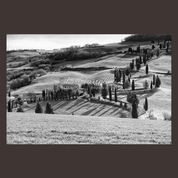 Foto bianco e nero di strada con cipressi in Val d'Orcia Toscana