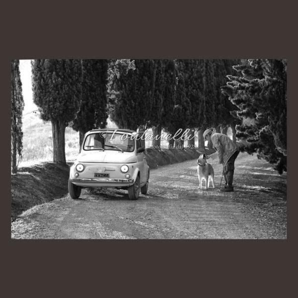 Foto di Fiat 500 in viale cipressato con uomo e Golden Retriver