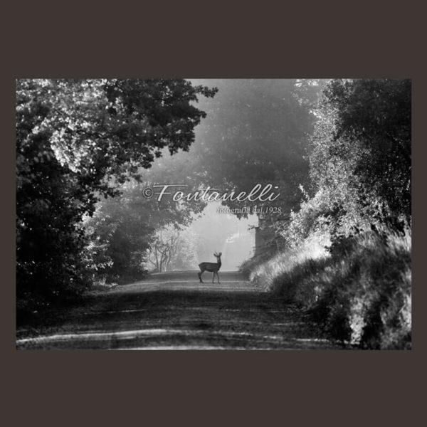 Foto bianco e nero campagna toscana con cervo