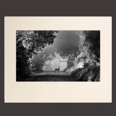 Black and white photo Tuscan countryside with deer