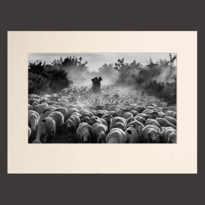 Black and white Photo of a shepherd with his sheep in the mist at dawn, Tuscany