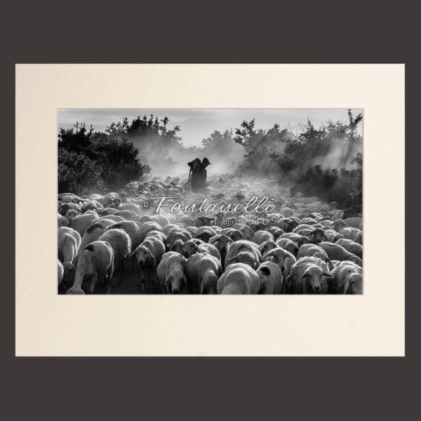 Foto bianco e nero di pastore nella nebbia con pecore Toscana